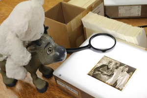 Museum work is kind of like detective work, we search for clues in an artifact to help us tell the story of our past. Any work with a magnifying glass is cool work for Snowflake and Sven.